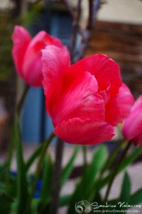 Des photos pour s'évader : un petit tour au jardin